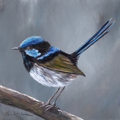 Superb Fairy Wren, Original bird painting, bird art, Australian wildlife bird,