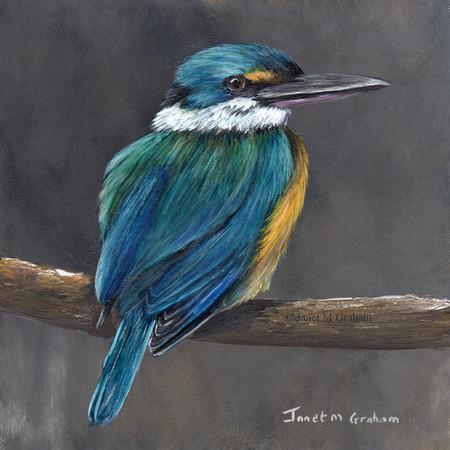 Sacred Kingfisher, Original bird painting, bird art, Australian wildlife bird,