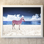 Zebra on the beach
