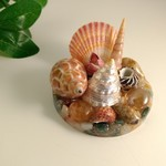 Seashell Table Ornament Resin Display