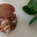 Seashell Table Ornament Resin Display