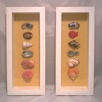 Set of Natural Seashell Shadow Box Feature Frames Original Artwork Pictures