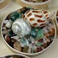 Set of 12 Wedding Table Ornaments Seashell Displays Cafe Restaurant