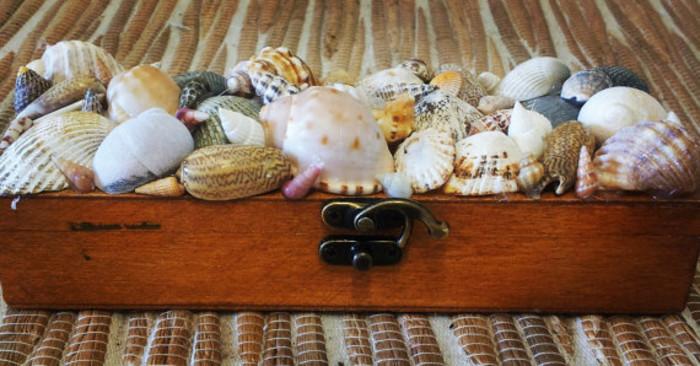 Beach Decor Seashell Jewelry Box Seashell Box Shell Jewelry Box