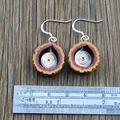 Hoop quandong earrings with wire spiral