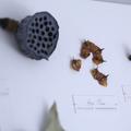 Herbarium art – 'Concrete'