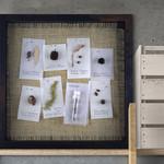 Herbarium art – 'Rust'