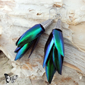Elytra Silver Earrings - REAL Thai Jewel Beetle wings