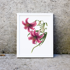 Lilys Instant Download Printable Botanical Art   A3, A4 & A5   Floral Wall Art