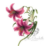Lily ~ A5 Fine Art Giclee Print | Watercolour Botanical Art | Home Decor