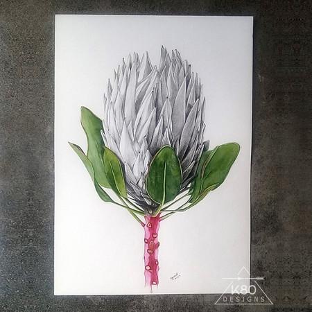 Protea Portrait - Original graphite and watercolour Art (A3)