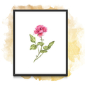 Watercolour Rose Instant Download Printable Floral Wall Art   A3, A4 & A5 sizes