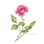 Watercolour  Rose~ A4 Giclee Print Botanical Floral Wall Art Decor