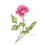 Watercolour  Rose~ A4 Giclee Print Botanical Floral Wall Art Decor