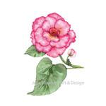 Watercolour  Begonia~ A4 Giclee Print Botanical Floral Wall Art Decor