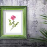 Watercolour Rose ~ A5 Giclee Print | Botanical Floral Wall Decor