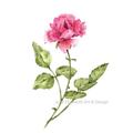 Set of 2  Watercolour  Prints A4 | Floral Botanical Wall art Home Decor