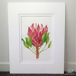 Protea Portrait 2 - Original watercolour and coloured pencil Art (A4)