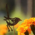 Fairy Wren Garden Decoration 2