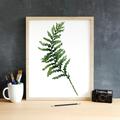 Fern Leaf Instant Download Printable Botanical Art   A3, A4 & A5 sizes