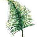 Palm Leaf Instant Download Printable Botanical Art | A3, A4 & A5 sizes
