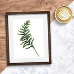 Watercolour Fern Leaf 8 x 10 on A4 Giclee Print Botanical   Wall Decor