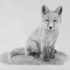 Fox - Limited Edition A3 Print (Ed. 4 of 50)