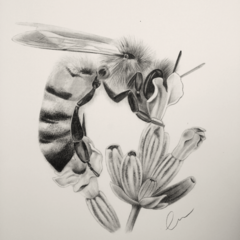 Bee on Lavender - Limited Edition A3 Print (Ed. 6 of 50)