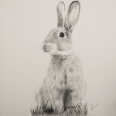 Bunny - Limited Edition A3 Print (Ed. 10 0f 50)