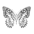 Butterfly - Limited Edition A3 Print (Ed. 7 of 50)