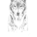 Wolf - Limited Edition A3 Prints (Ed. 10 of 50)
