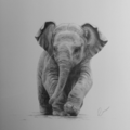 Baby Elephant - Limited Edition A3 Print (Ed. 6. pf 50)