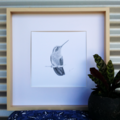 Honeyeater - Limited Edition A3 Print (Ed. 11 of 50)
