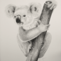Koala - A3 Limited Edition Print (ed. 9 of 50)