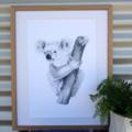 Koala - A3 Limited Edition Print (ed. 9 of 50)