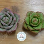6 x Edible Hand crafted Fondant Succulent cupcake toppers