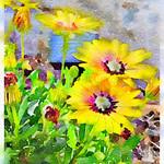 Watercolor Print - Yellow Daisies - Floral