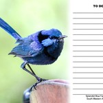 Splendid Blue Wren 'To Do' Fridge Magnet with white board marker