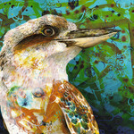 Kookaburra King - fine art print (10 x 8 in)