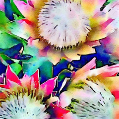 Watercolor Print - Floral - Proteas