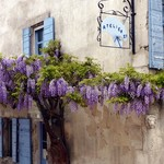 1578 Wisteria Aigues-Mortes France Greeting Card