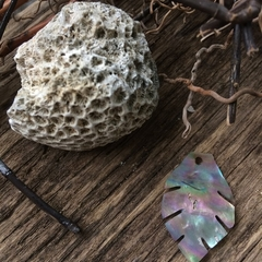 Dainty shell leaf with rainbow colours, reflected from mother of pearl natural f