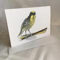 Helmeted Honeyeater with pencils - Australian wildlife art greeting card. Yellow