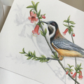 Eastern Spinebill - Australian wildlife art greeting card. Native correa flower