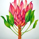 Protea Portrait 2 - Original Art (A4)
