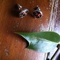 Spooky halloween earrings! Orange and black bead cameo earrings.