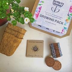 Christmas Gift Pack Flower Seed Gift
