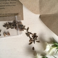 Personalised Christmas Gift Pack Flower Seed Gift