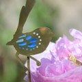 Brass & Resin Fairy Wren Garden Decoration #2