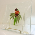 Rainbow Lorikeet art glass plate